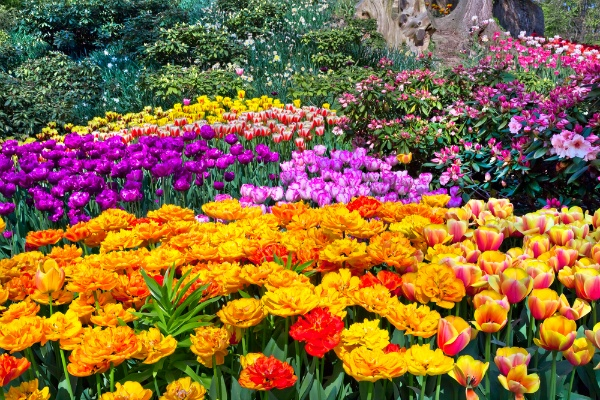 38-flowers-each-gardener-can-grow