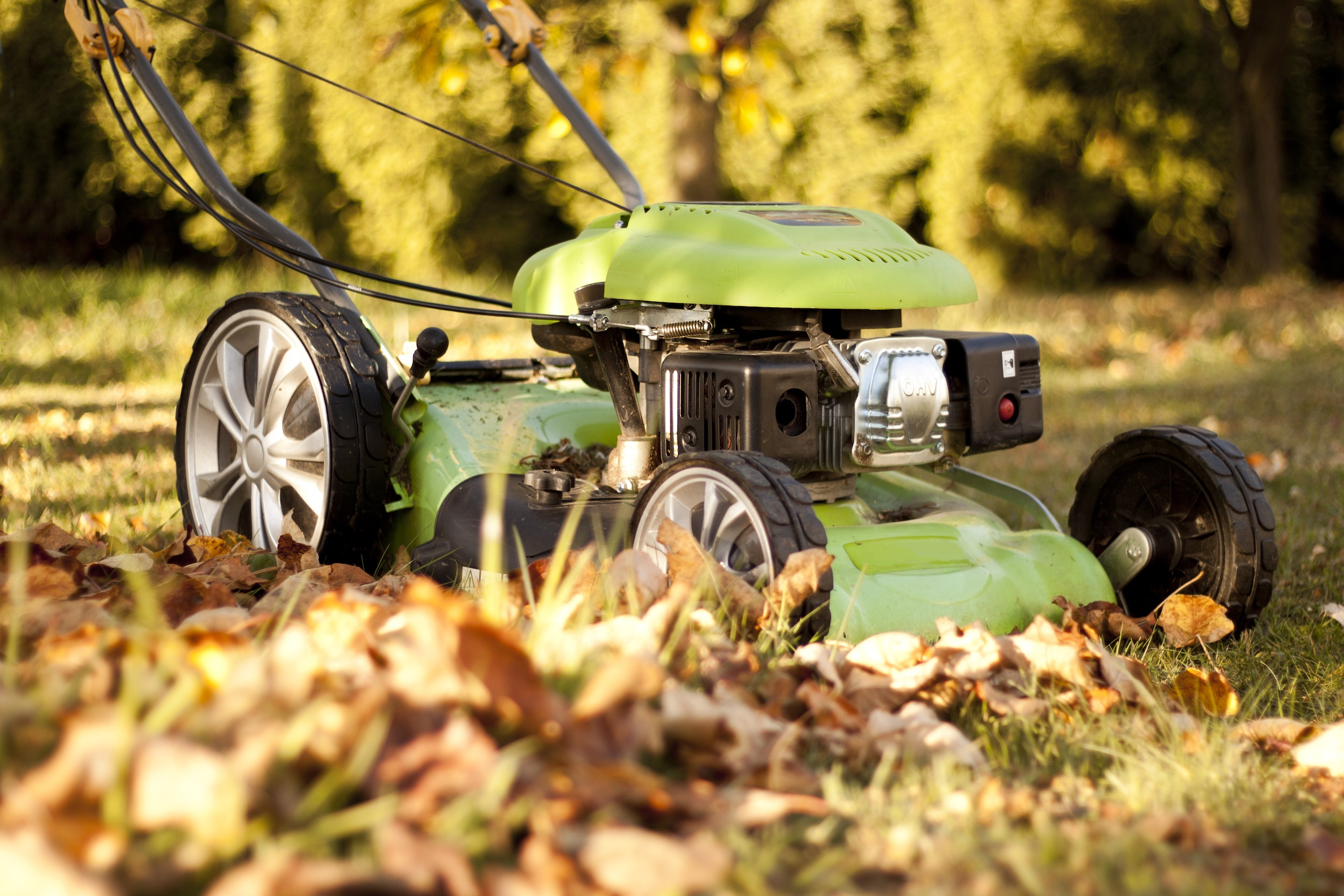 3 Things Gardeners Need To Do During Autumn and Winter   The Experienced Gardener