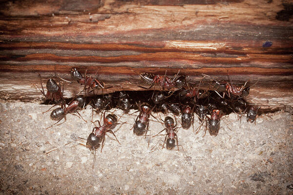 4 Options For Dealing With Ant Problems | San Joaquin Pest Control