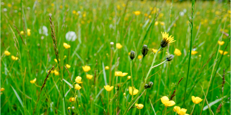4 Tips for Keeping Weeds out of your Yard All Season Long | The Experienced Gardener