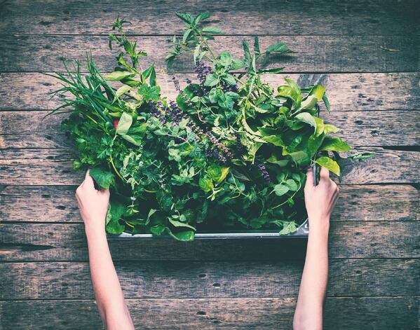 5 Easy-To-Grow Herbs That Can Enhance Your Summer Meal | The Experienced Gardeners