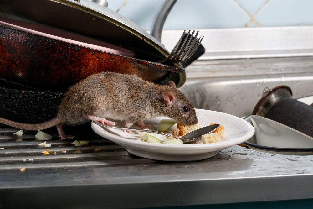 Are Rodents Around Most During Winter | San Joaquin Pest Control