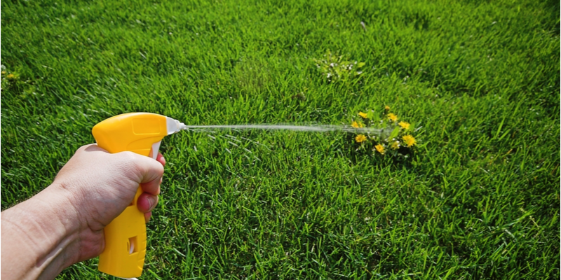 Are Weeds Popping Up in Your Yard? Here's What to Do. | The Experienced Gardener