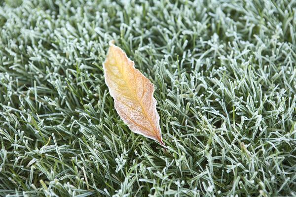 Can I Ignore My Lawn in the Fall and Winter? | The Experienced Gardener