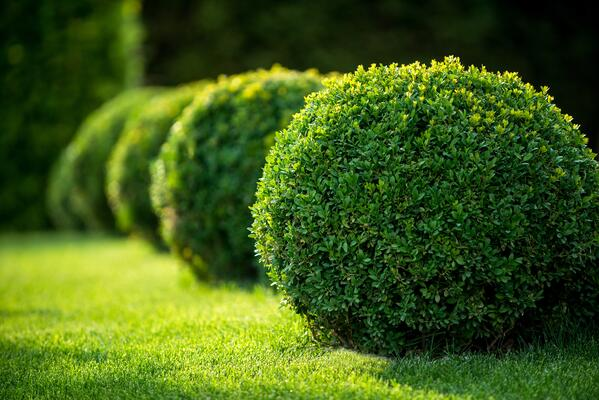 Can I Plant New Shrubs in the Fall? | The Experienced Gardener