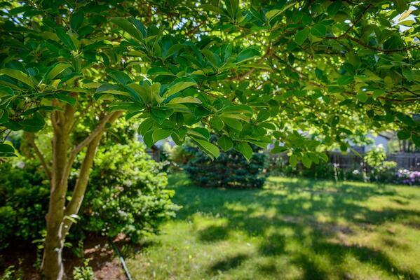 Caring For Your Trees-What To Do  | The Experienced Gardener