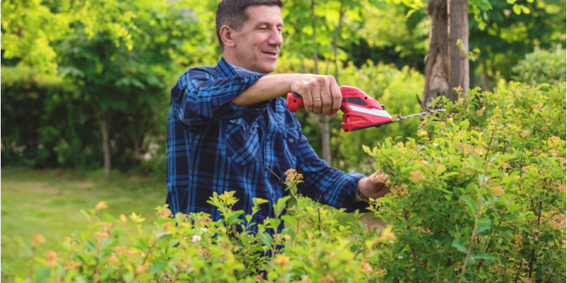Caring for Your Shrubs Through the Spring and Summer | The Experienced Gardener