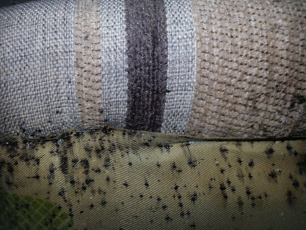 Do Bed Bugs Go Away In Winter?  | San Joaquin Pest Control