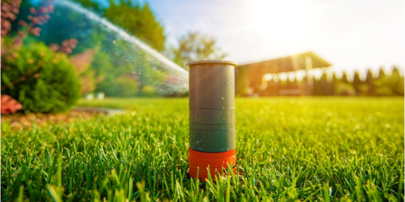 Tips for Helping Your Yard Survive the Heat