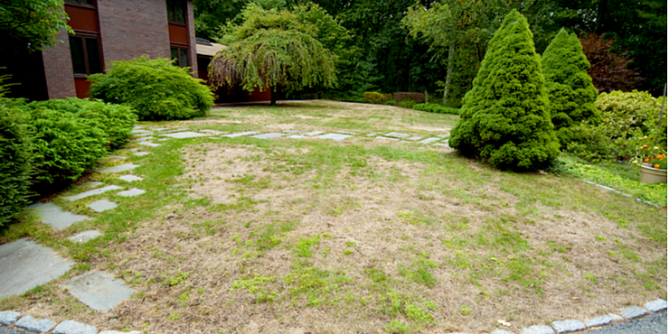 Are Lawns more Susceptible to Disease and Pests During the Summer? | The Experienced Gardener