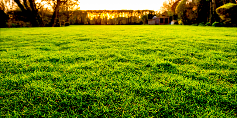 Benefit of Getting Professional Help for Your Lawn Care Needs | The Experienced Gardener