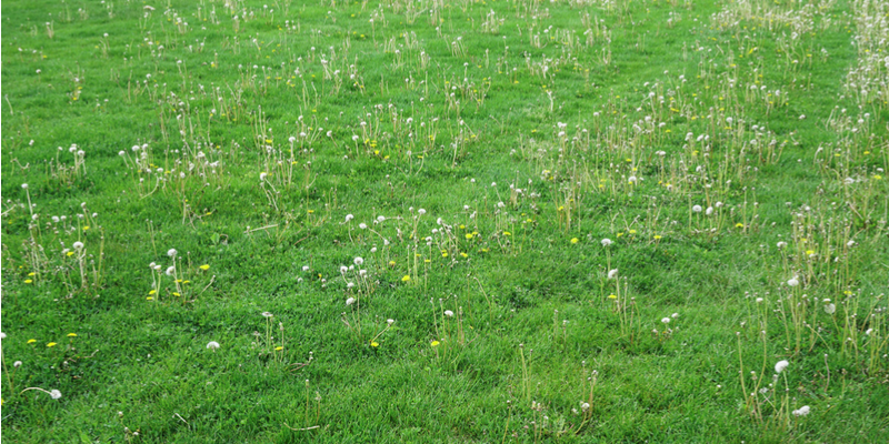 Four Reasons You Need Weed Control Services this Spring and Summer