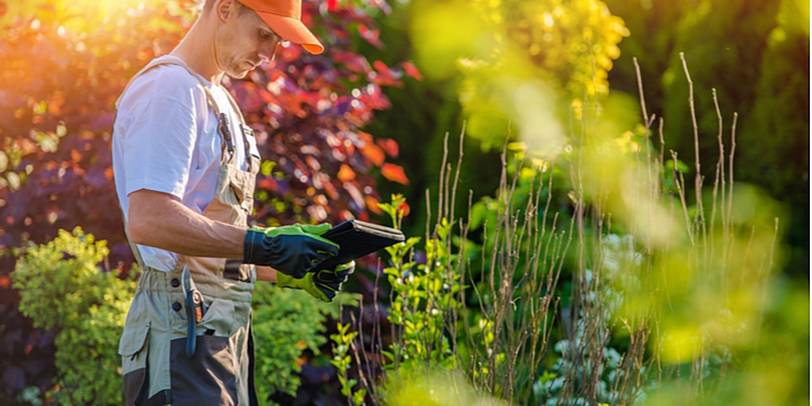How Often Should I Schedule Lawn Care Services? | The Experienced Gardener
