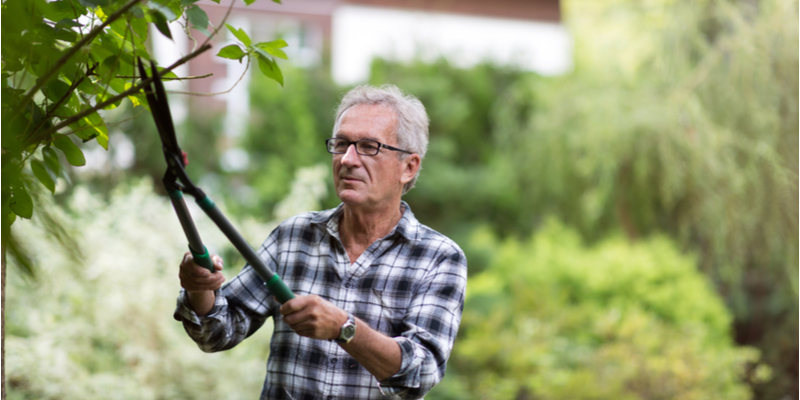 Keep Your Trees Free from Damage and Disease with These Tips