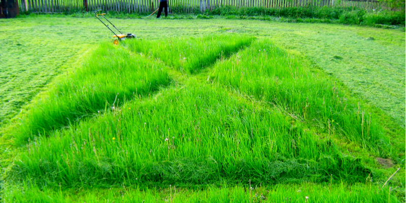 Lawn Care Services That Will Improve the Health of Your Yard