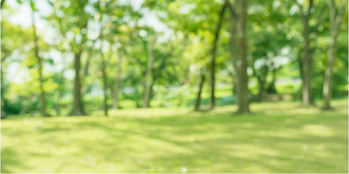 Summer is Here-Time to Make a Plan for Lawn Care | The Experienced Gardener