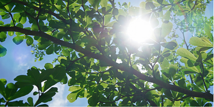 Tasks that Maximize the Health of Your Trees | The Experienced Gardener