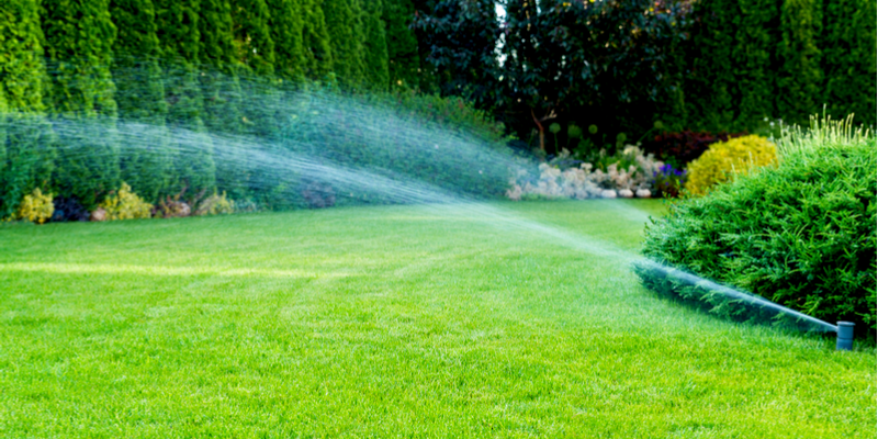 Three Steps You Must Take to Get a Healthy Yard