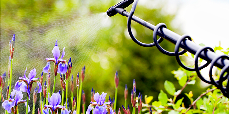 Where Can I Get Help Protecting My Yard from Pests? | The Experienced Gardener