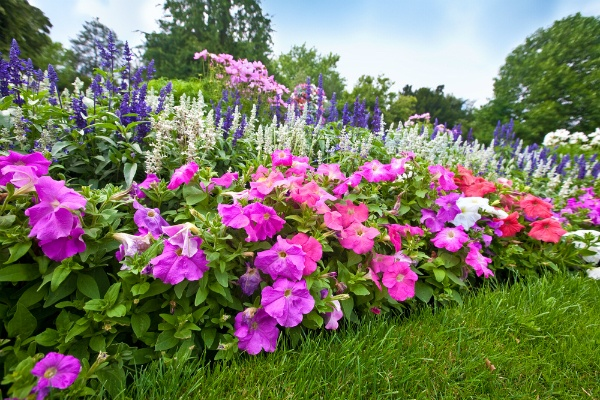 Advice For Growing a Flower Garden | The Experienced Gardener