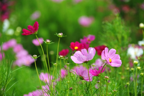 Designing a Flower Garden For The First Time? | The Experienced Gardener