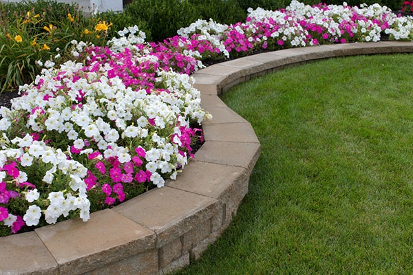 How Do I Choose Flowers For My Flowerbed? | The Experienced Gardener