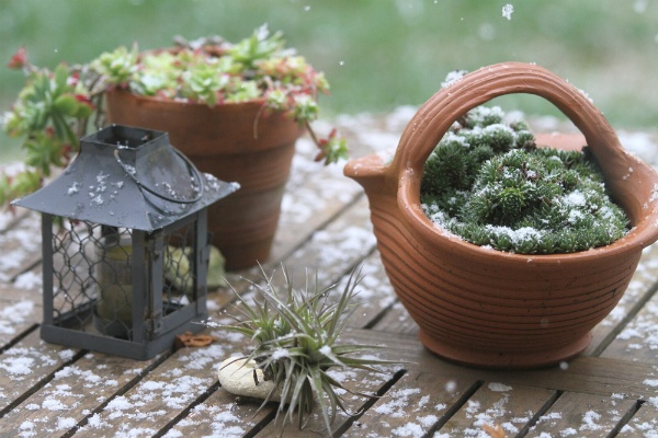 How Can I Improve My Landscape During the Cold Season? | The Experienced Gardener