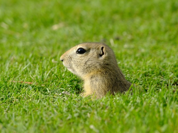 How to Avoid Getting a Pest Infestation in Your Yard | The Experienced Gardener