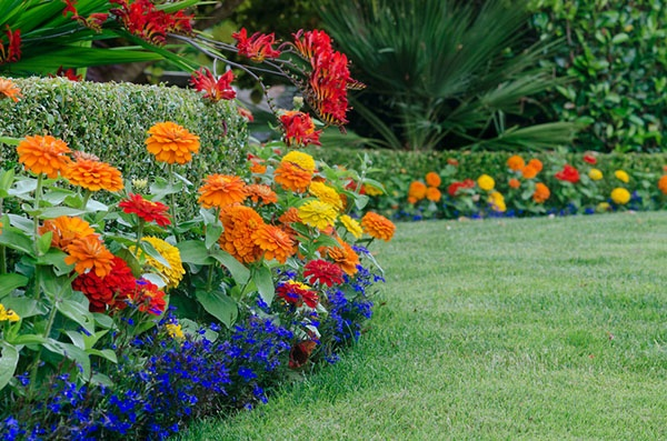 What Are The Key Ingredients for Creating a Healthy Yard? | The Experienced Gardener
