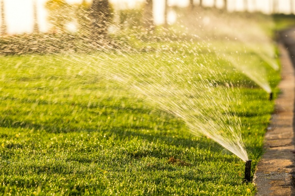 Lawn Care Services: It Takes Time | The Experienced Gardener