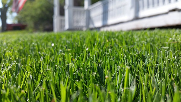When is the Best Time to Aerate Your Lawn? | The Experienced Gardener