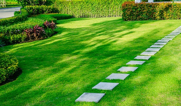 What Should I Expect from a Seasonal Scheduled Lawn Care Service? | The Experienced Gardener