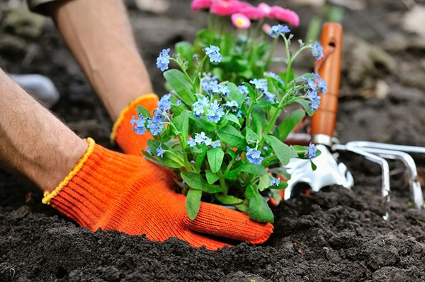 How to Protect Your Newly Planted Flowers from Threats | The Experienced Gardener
