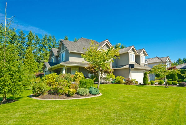 Are There Trees and Shrubs that Can Cause Damage to My House? | The Experienced Gardener