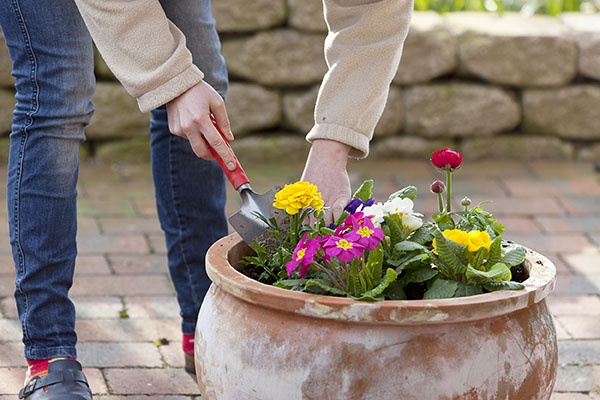 Simple Tips for Spring Lawn Care | The Experienced Gardener
