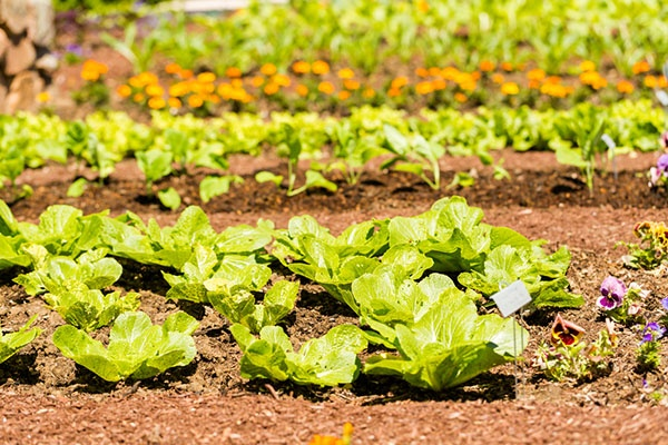 How to Protect Your New Vegetable Garden from Pests/Disease | The Experienced Gardener