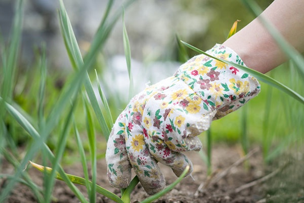 How To Kill Off Weeds in 3 Steps | The Experienced Gardener