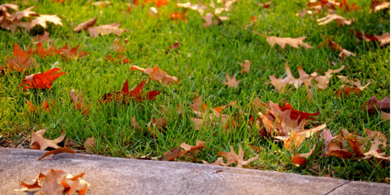 Fall Lawn Care Tasks You Should Invest Your Time In | The Experienced Gardener