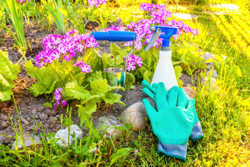 Garden Tasks To Complete Before March Ends | The Experienced Gardener