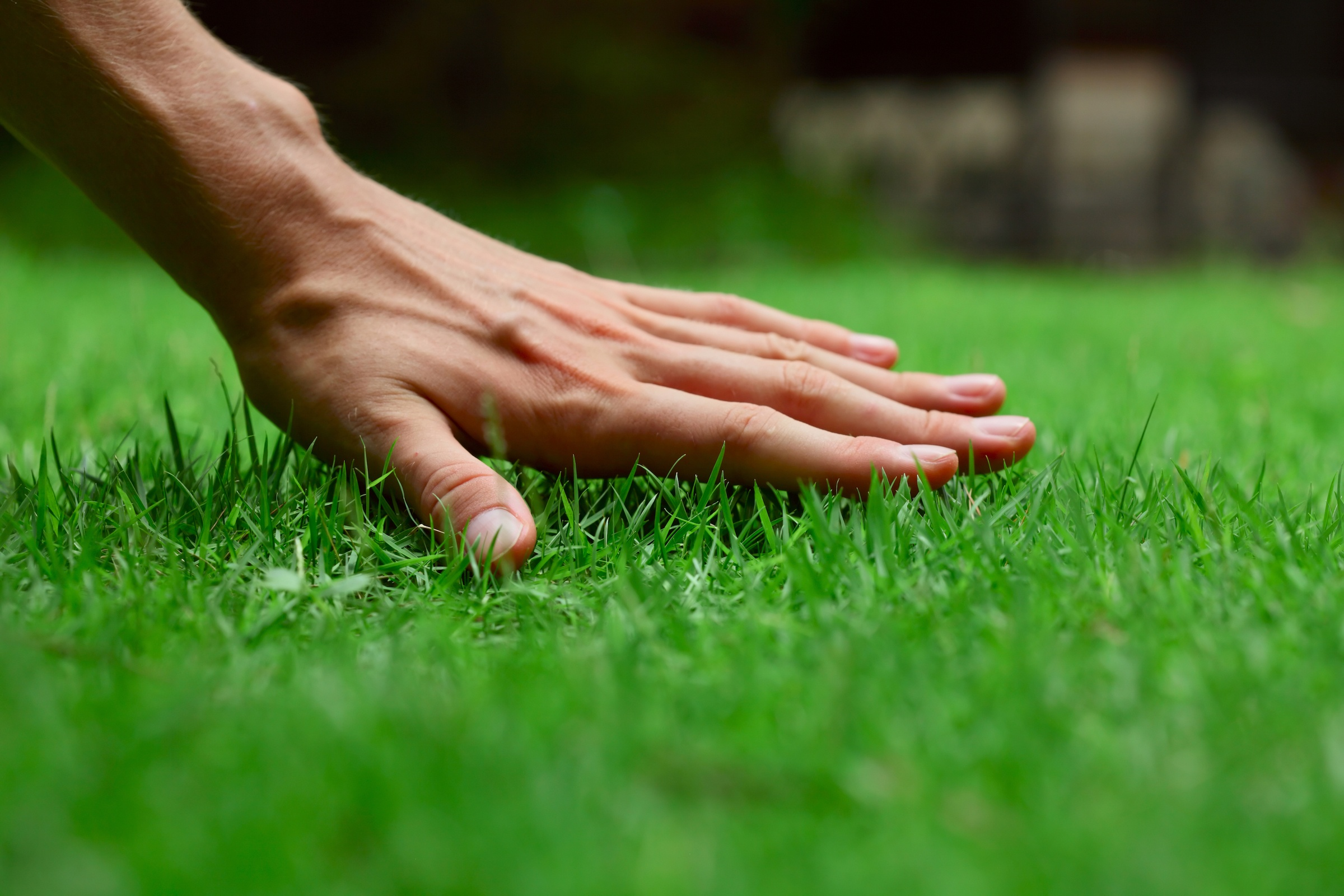 How Important is Experience When Looking for a Lawn Care Company | The Experienced Gardener