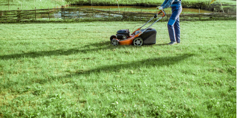 How to Determine if You Need Professional Help with Your Lawn | The Experienced Gardener