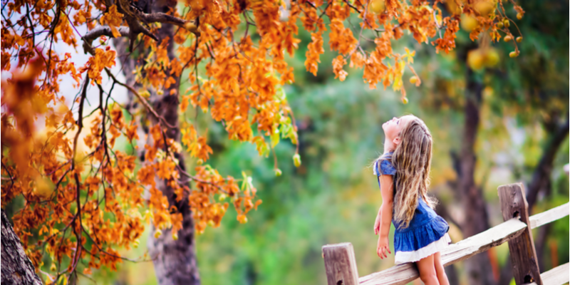 How to Properly Care for Your Trees This Fall | The Experienced Gardener
