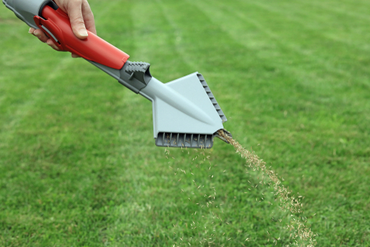 How to Tell If Your Lawn is Getting Adequate Nutrition | The Experienced Gardener