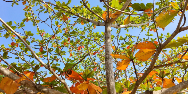 How to Tell if the Trees in Your Yard are Going Into Dormancy | The Experienced Gardener