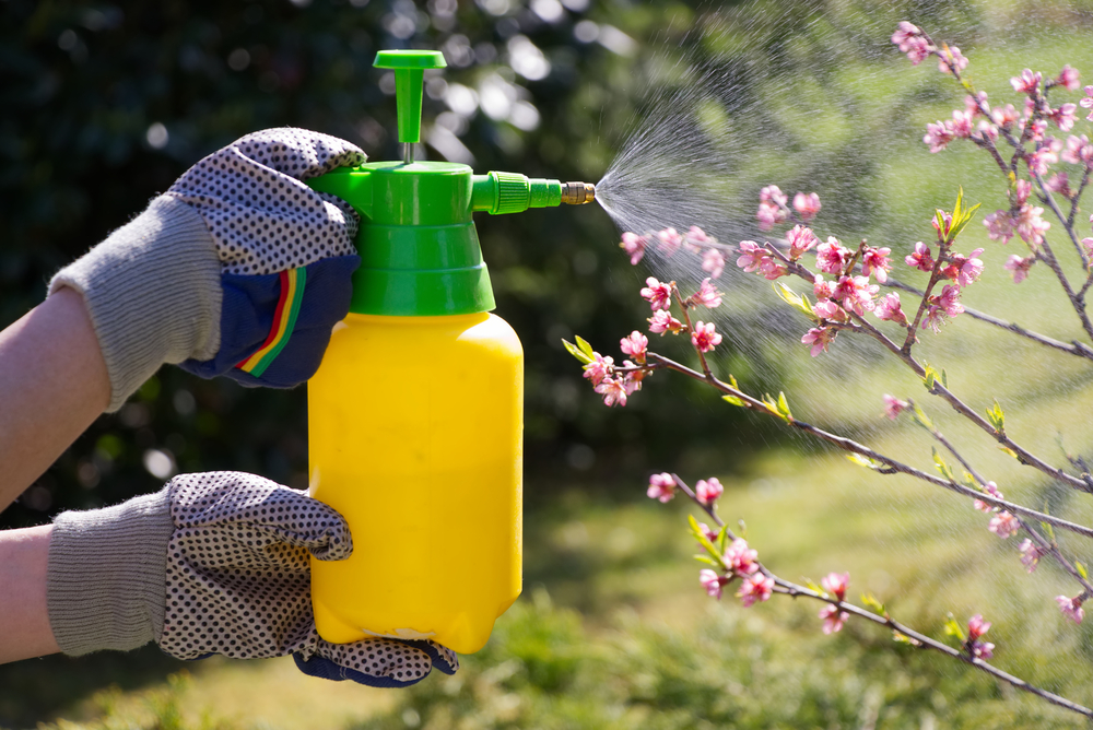 Is It Possible To Get Rid Of Garden Pests Without Chemicals? | The Experienced Gardener