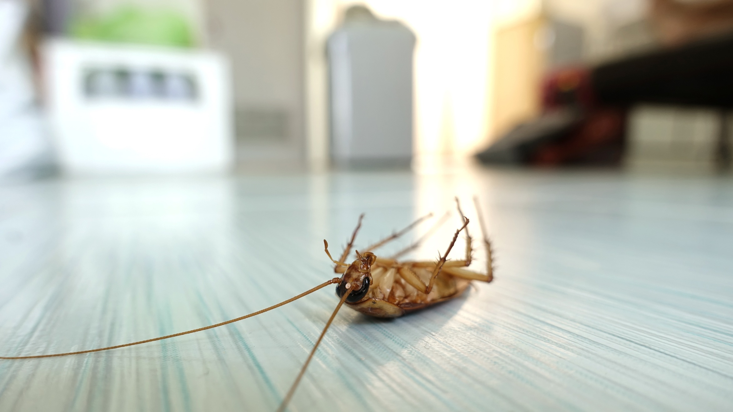 Is There Any Way to Completely Get Rid of Roaches? | San Joaquin Pest Control