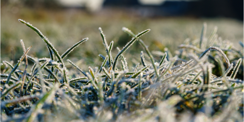Lawn Tasks You Can Start Doing While it is Still Cold Outside | The Experienced Gardener
