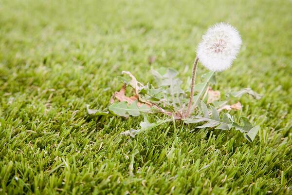Options For Treating A Weed Issue In Lawns | The Experienced Gardener
