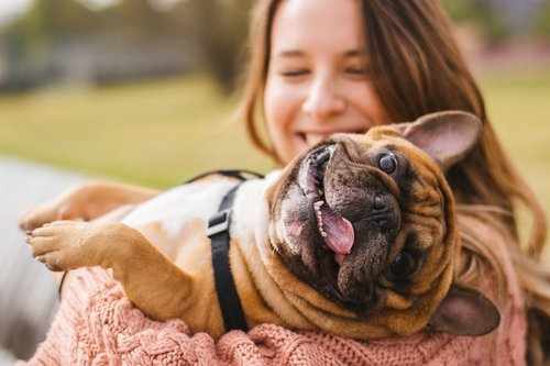 Pet Related Pest Issues | San Joaquin Pest Control