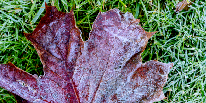 Preparing Your Lawn for the Winter Months | The Experienced Gardener